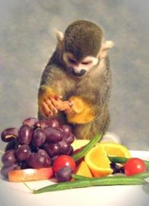 Dalton the squirrel monkey